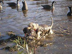 Goose & Duck Hunting Image 8